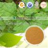 广藿香提取物 厂家优质供应 可做商检