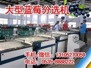 XGJ-LM-果农的小帮手-,蓝莓选果机,按直径筛选蓝莓大小的分选机