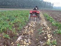 新型土豆收获机