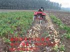 供应大蒜土豆收获机