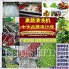 厂家供应蔬菜气泡清洗机,菠菜清洗机